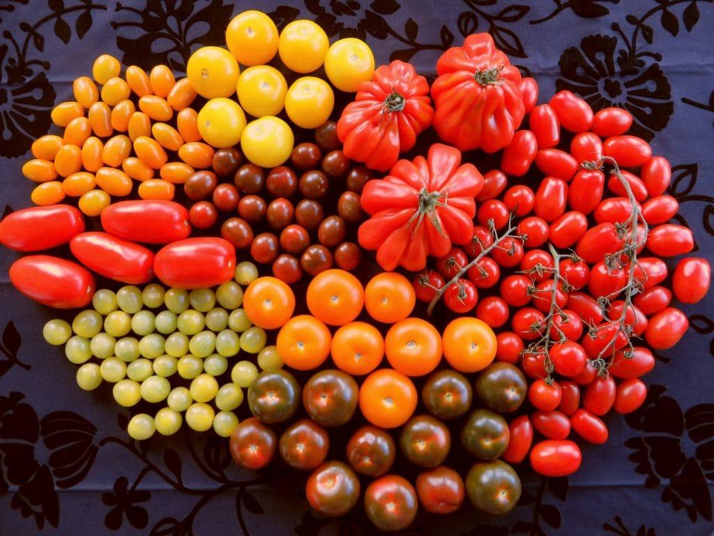 Negen soorten tomaten